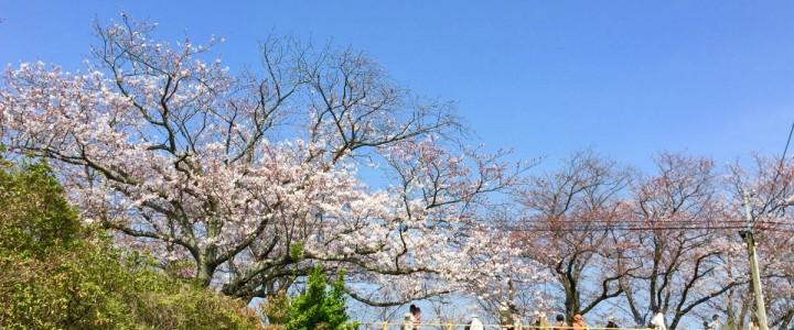 今年の佐賀の桜開花予想は3/23 満開予想は4/2です