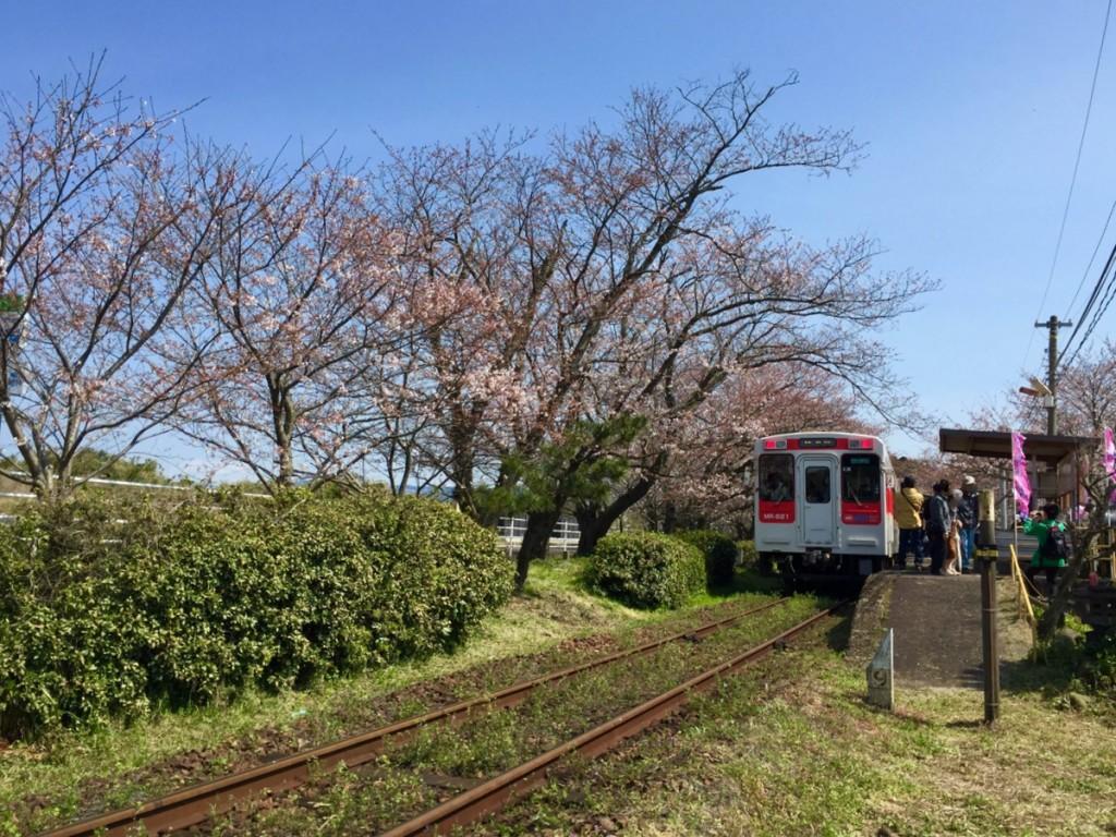 古伊万里蔵開き+浦ノ崎駅花見14