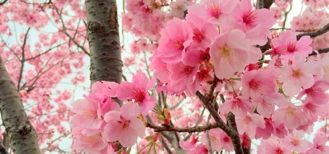 2016年春 伊万里と近郊のお花見・春のおまつりスケジュール(前半)