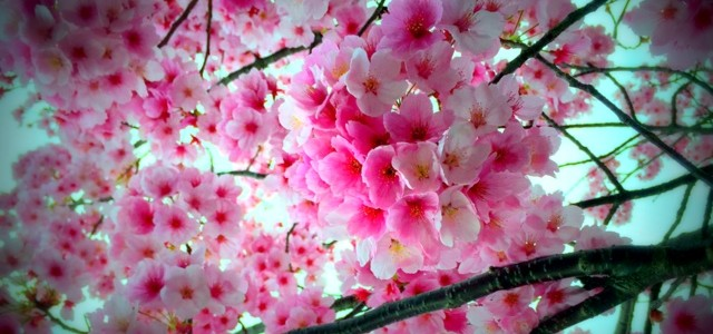 2016年春 伊万里と近郊のお花見・春のおまつりスケジュール(後半)